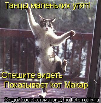 Котоматрица: Танцы маленьких утят!  Спешите видеть Показывает кот Макар