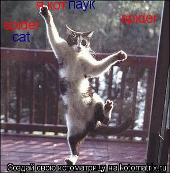 Котоматрица: я кот паук spider spider cat