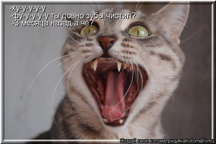 Котоматрица: -ху-у-у-у-у -фу-у-у-у-у ты довно зубы чистил? -3 месяца назад а чё?