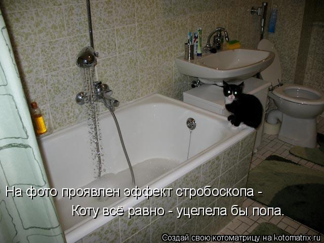 Котоматрица: На фото проявлен эффект стробоскопа - Коту всё равно - уцелела бы попа.