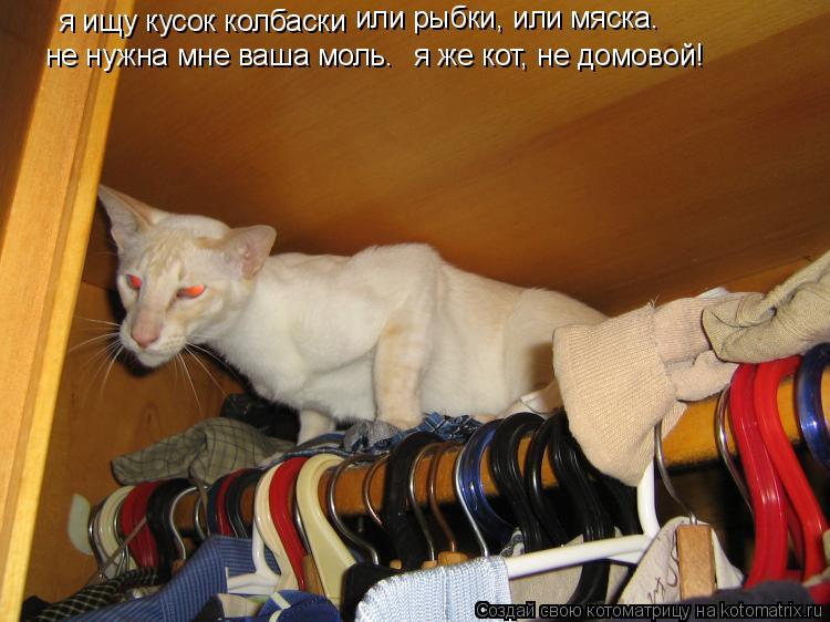 Котоматрица: я ищу кусок колбаски или рыбки, или мяска. я же кот, не домовой!  не нужна мне ваша моль.