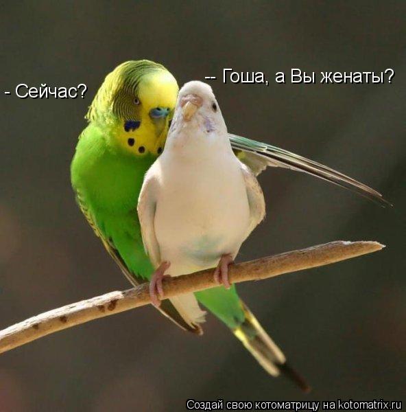 Котоматрица - -- Гоша, а Вы женаты?  - Сейчас?
