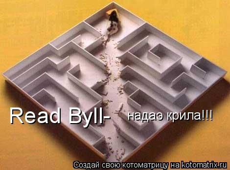 Котоматрица: Read Byll- надаэ крила!!!