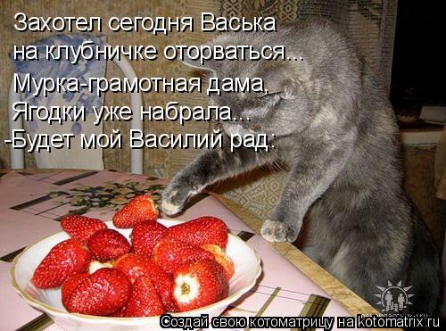 Котоматрица: Захотел сегодня Васька на клубничке оторваться... Мурка-грамотная дама, Ягодки уже набрала... -Будет мой Василий рад:
