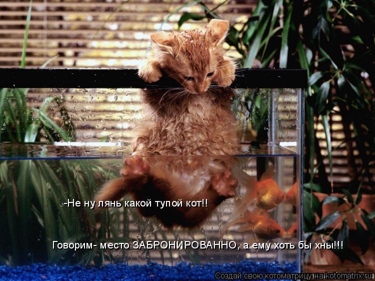 Котоматрица: -Не ну лянь какой тупой кот!! Говорим- место ЗАБРОНИРОВАННО, а ему хоть бы хны!!!