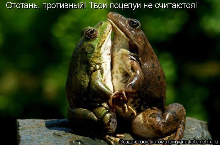 Котоматрица: Отстань, противный! Твои поцелуи не считаются!