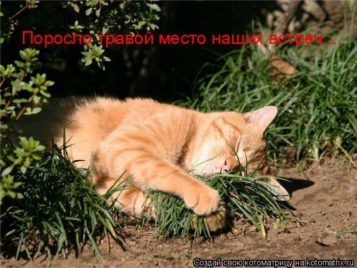 Котоматрица: Поросло травой место наших встреч....