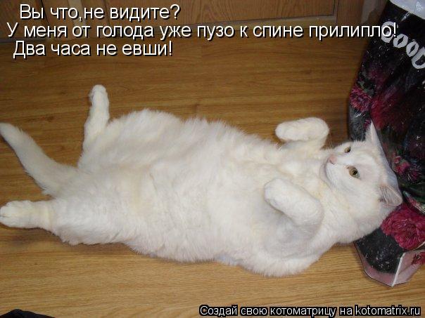 Котоматрица: Вы что,не видите? У меня от голода уже пузо к спине прилипло! Два часа не евши!