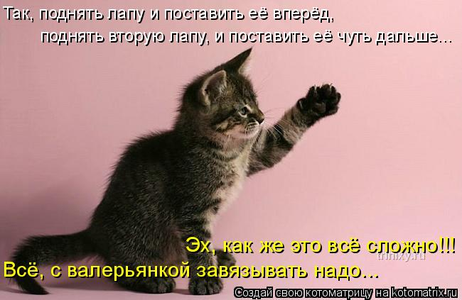 Котоматрица: Эх, как же это всё сложно!!! поднять вторую лапу, и поставить её чуть дальше... Так, поднять лапу и поставить её вперёд, Всё, с валерьянкой завяз