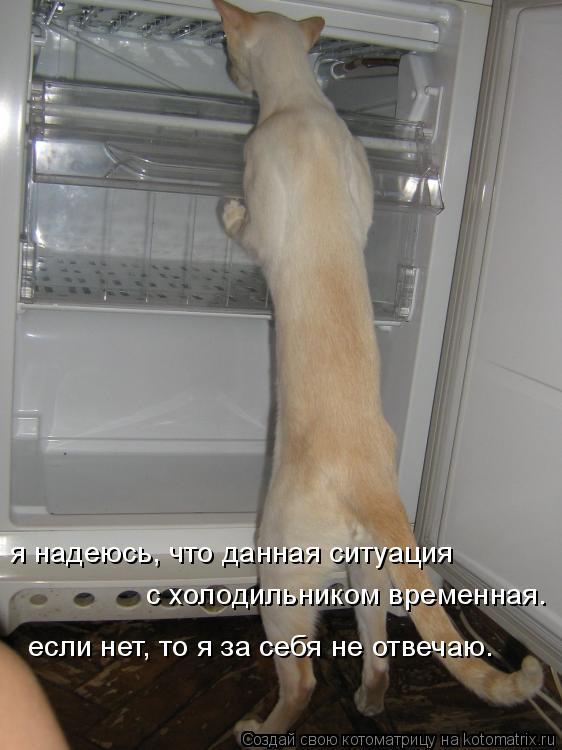 Котоматрица: если нет, то я за себя не отвечаю.  с холодильником временная. я надеюсь, что данная ситуация