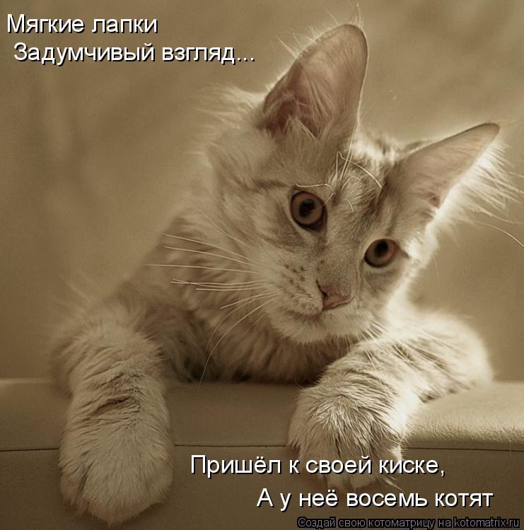 Котоматрица: Мягкие лапки Задумчивый взгляд... Пришёл к своей киске, А у неё восемь котят