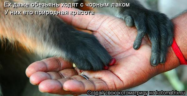 Котоматрица: Ех даже обезьянь ходят с чорным лаком  У них ето природная красота