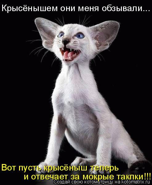Котоматрица: Вот пусть крысёныш теперь  и отвечает за мокрые такпки!!! Крысёнышем они меня обзывали...