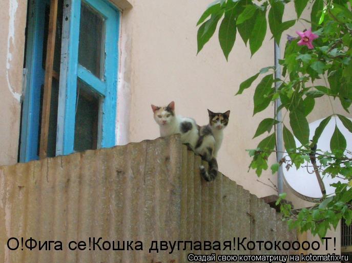Котоматрица: О!Фига се!Кошка двуглавая!КотокооооТ!