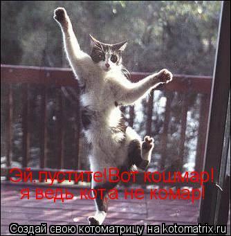 Котоматрица: я ведь кот,а не комар! Эй,пустите!Вот кошмар!