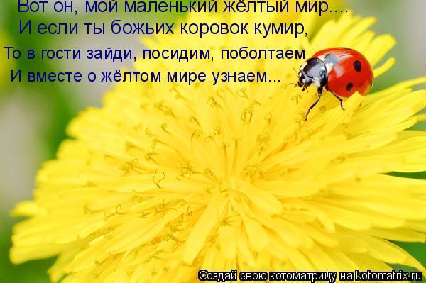 Котоматрица: То в гости зайди, посидим, поболтаем И если ты божьих коровок кумир, Вот он, мой маленький жёлтый мир.... И вместе о жёлтом мире узнаем...