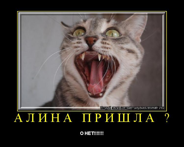 Котоматрица: АЛИНА ПРИШЛА ? О НЕТ!!!!!!!