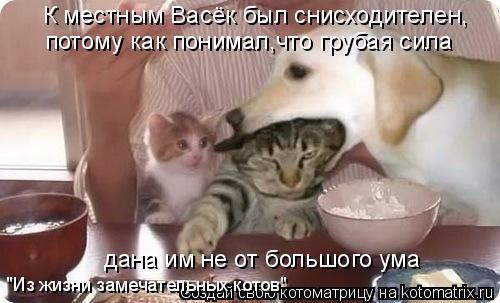"""Котоматрица: К местным Васёк был снисходителен, потому как понимал,что грубая сила дана им не от большого ума """"Из жизни замечательных котов"""""""