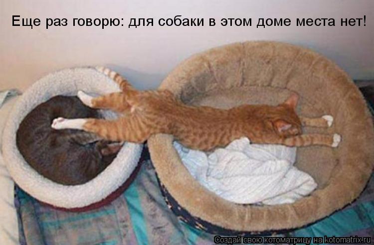 Котоматрица: Еще раз говорю: для собаки в этом доме места нет!