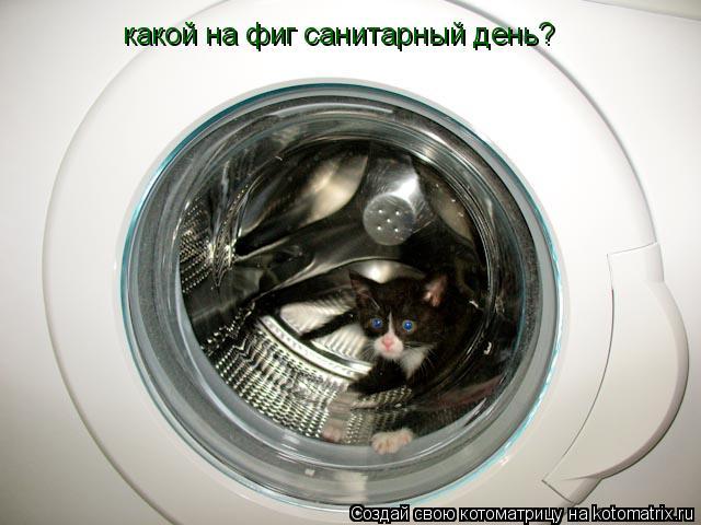 Котоматрица: какой на фиг санитарный день?