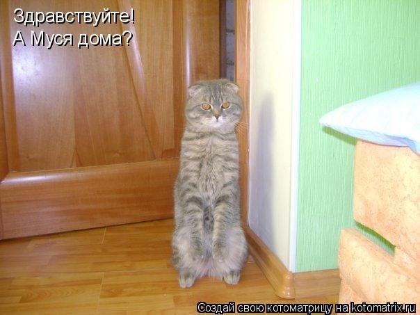 Котоматрица: Здравствуйте! А Муся дома?