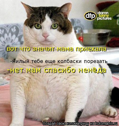 Котоматрица: вот что значит мама приехала -милый тебе еще колбаски порезать -нет мам спасибо ненеда а
