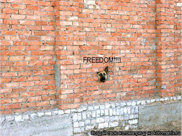Котоматрица: FREEDOM!!!!