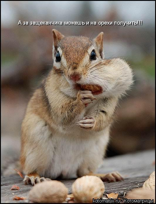 Котоматрица: А за защеканчика можешь и на орехи получить!!!