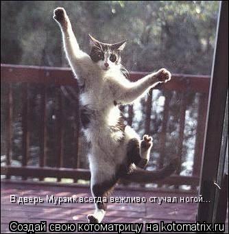 Котоматрица: В дверь Мурзик всегда вежливо стучал ногой...