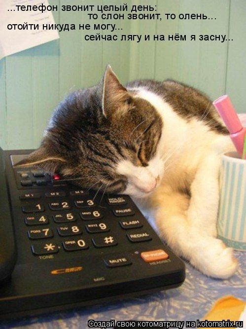 Котоматрица: ...телефон звонит целый день: то слон звонит, то олень... отойти никуда не могу... сейчас лягу и на нём я засну...