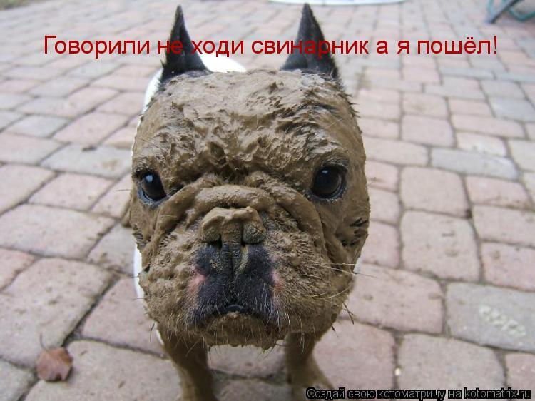 Котоматрица: Говорили не ходи свинарник а я пошёл!