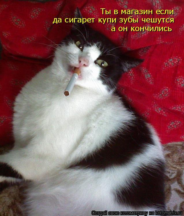 Котоматрица: Ты в магазин если  да сигарет купи зубы чешутся а он кончились