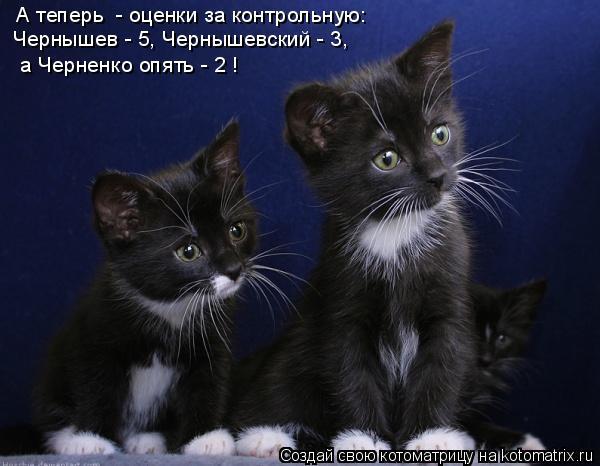 Котоматрица: А теперь  - оценки за контрольную: Чернышев - 5, Чернышевский - 3,  а Черненко опять - 2 !