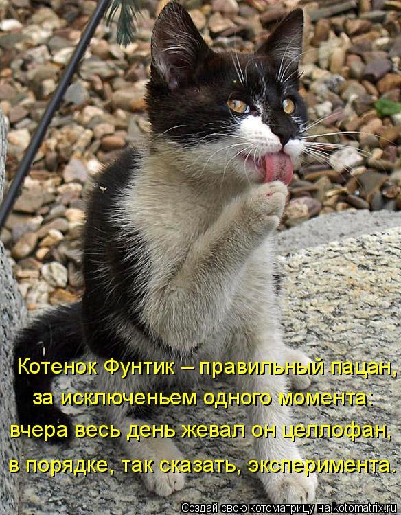 Котоматрица: Котенок Фунтик – правильный пацан, за исключеньем одного момента: вчера весь день жевал он целлофан, в порядке, так сказать, эксперимента