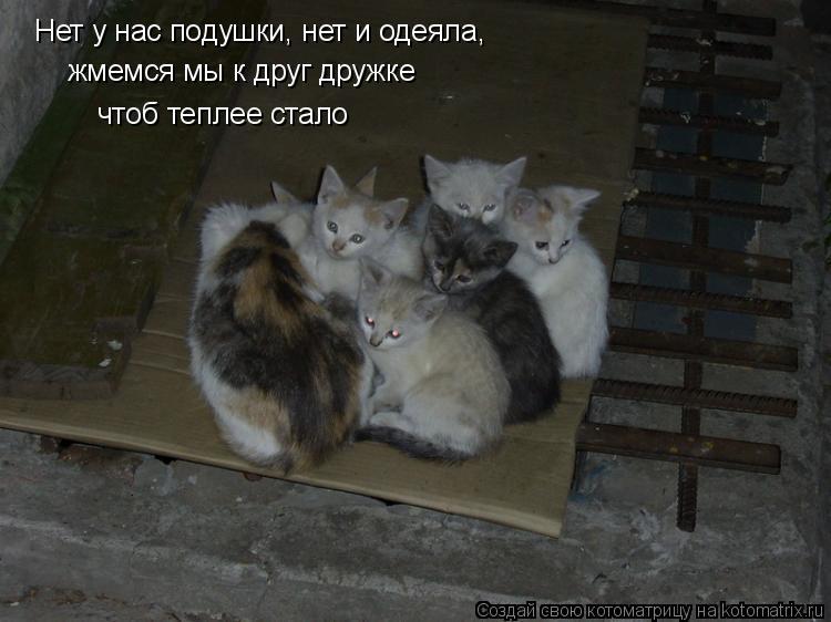 Котоматрица: Нет у нас подушки, нет и одеяла, жмемся мы к друг дружке чтоб теплее стало