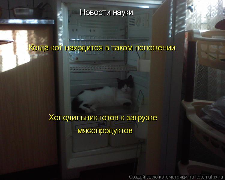 Котоматрица: Когда кот находится в таком положении мясопродуктов Новости науки Холодильник готов к загрузке