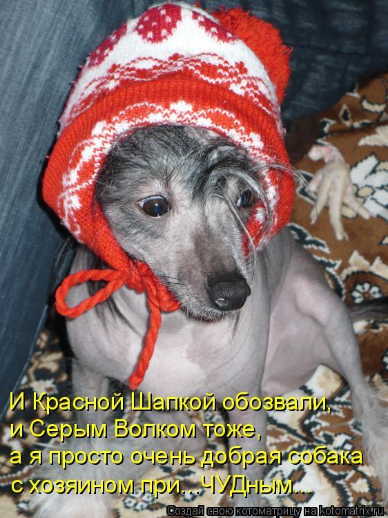 Котоматрица: И Красной Шапкой обозвали, и Серым Волком тоже, а я просто очень добрая собака с хозяином при...ЧУДным...