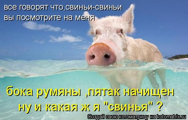 """Котоматрица: все говорят что,свиньи-свиньи вы посмотрите на меня бока румяны ,пятак начищен ну и какая ж я """"свинья"""" ?"""