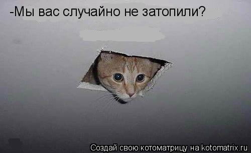 Котоматрица: -Мы вас случайно не затопили?