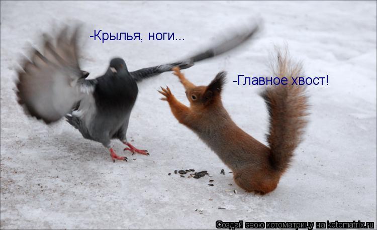 Котоматрица: -Крылья, ноги... -Главное хвост!