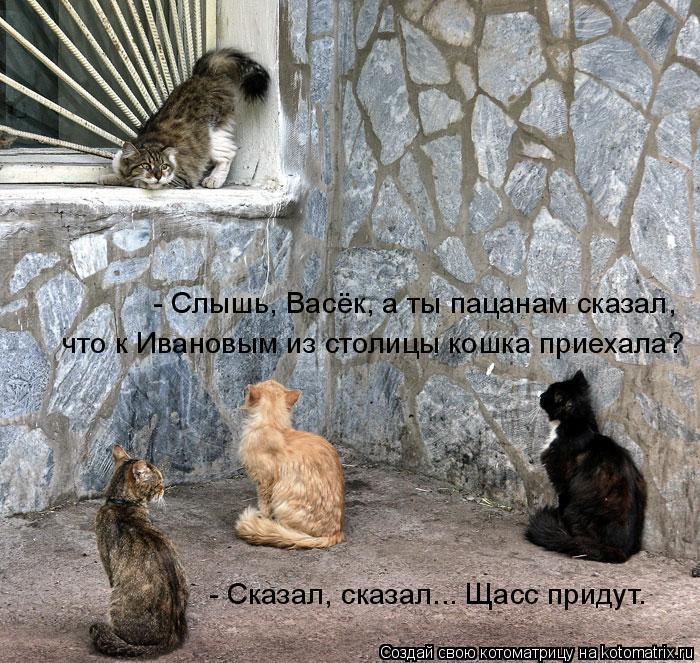Котоматрица: что к Ивановым из столицы кошка приехала?  - Слышь, Васёк, а ты пацанам сказал,  - Сказал, сказал... Щасс придут.