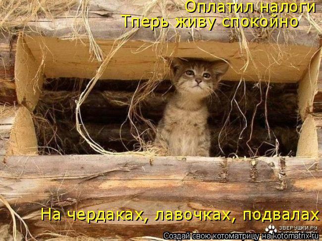 Котоматрица: Оплатил налоги Тперь живу спокойно На чердаках, лавочках, подвалах