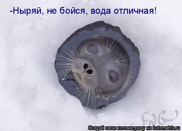 Котоматрица: -Ныряй, не бойся, вода отличная!