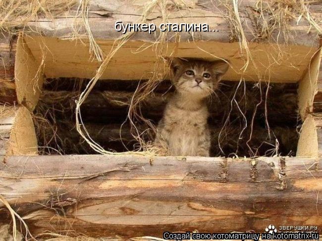 Котоматрица: бункер сталина...