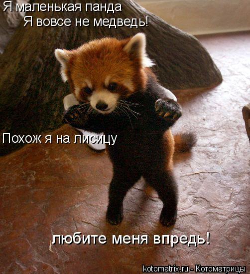 Котоматрица: Я маленькая панда Я вовсе не медведь! Похож я на лисицу любите меня впредь!