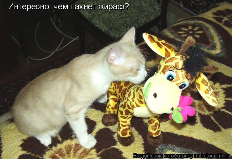 Котоматрица: Интересно, чем пахнет жираф?