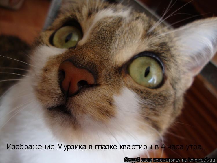 Котоматрица: Изображение Мурзика в глазке квартиры в 4 часа утра...