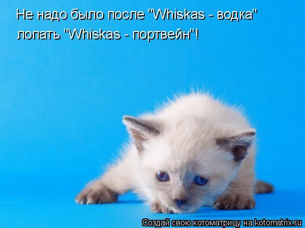 """Котоматрица: Не надо было после """"Whiskas - водка"""" лопать """"Whiskas - портвейн""""!"""