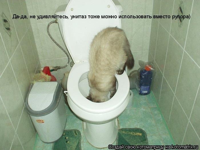 Котоматрица: Да-да, не удивляйтесь, унитаз тоже можно использовать вместо рупора)