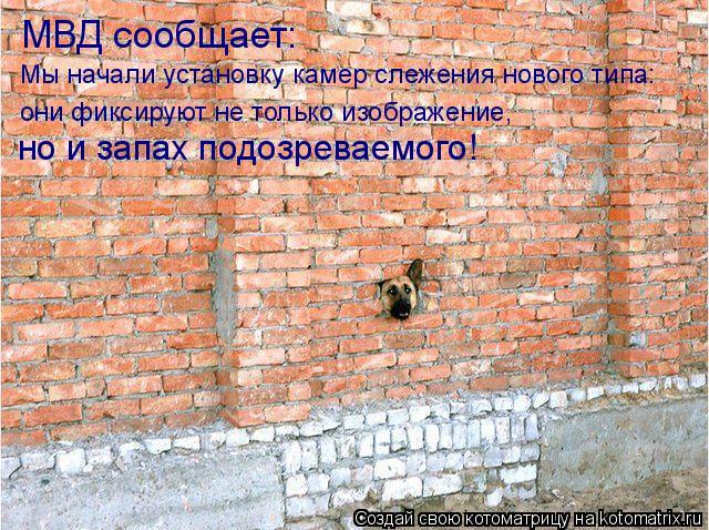 Котоматрица: МВД сообщает: Мы начали установку камер слежения нового типа: они фиксируют не только изображение,  но и запах подозреваемого!